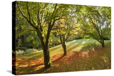 Fall Scenic on the Bloedel Reserve, Bainbridge Island, Washington, USA-Jaynes Gallery-Stretched Canvas Print
