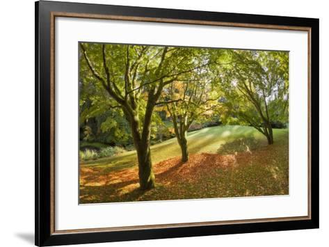 Fall Scenic on the Bloedel Reserve, Bainbridge Island, Washington, USA-Jaynes Gallery-Framed Art Print