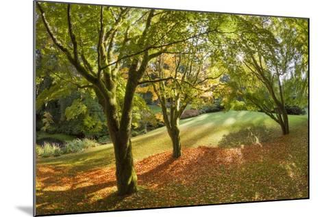 Fall Scenic on the Bloedel Reserve, Bainbridge Island, Washington, USA-Jaynes Gallery-Mounted Photographic Print