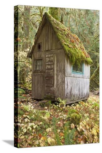 Weathered Old Cabin in Forest, Olympic National Park, Washington, USA-Jaynes Gallery-Stretched Canvas Print