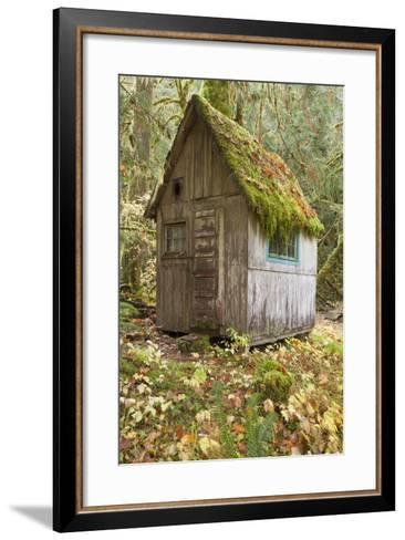 Weathered Old Cabin in Forest, Olympic National Park, Washington, USA-Jaynes Gallery-Framed Art Print