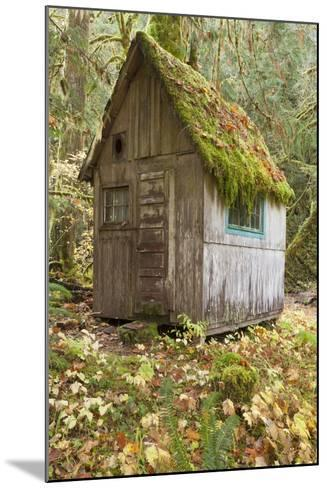 Weathered Old Cabin in Forest, Olympic National Park, Washington, USA-Jaynes Gallery-Mounted Photographic Print