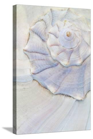 Close-Up of Pastel Seashell, Washington, USA-Jaynes Gallery-Stretched Canvas Print