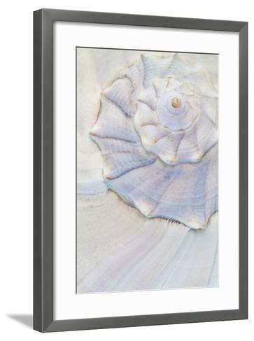 Close-Up of Pastel Seashell, Washington, USA-Jaynes Gallery-Framed Art Print