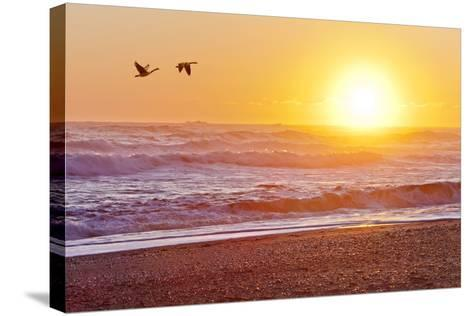 Canada Geese over Rialto Beach at Sunset, Olympic NP, Washington, USA-Jaynes Gallery-Stretched Canvas Print