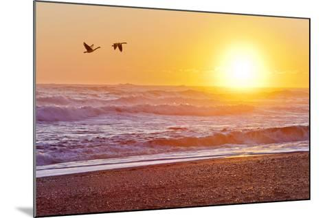 Canada Geese over Rialto Beach at Sunset, Olympic NP, Washington, USA-Jaynes Gallery-Mounted Photographic Print