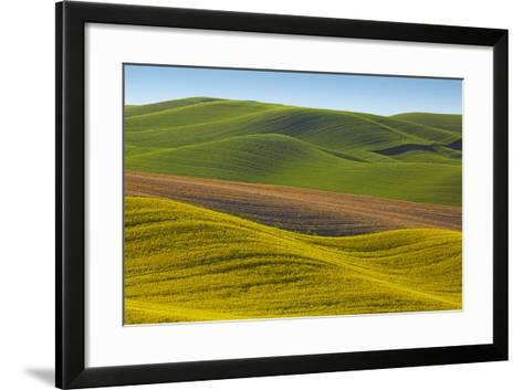Canola Fields and Wheat, Palouse, Whitman County, Washington, USA-Charles Gurche-Framed Art Print