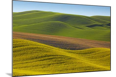Canola Fields and Wheat, Palouse, Whitman County, Washington, USA-Charles Gurche-Mounted Photographic Print