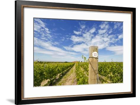 Cabernet Sauvignon Vineyards, Pepper Bridge Winery, Washington, USA-Richard Duval-Framed Art Print