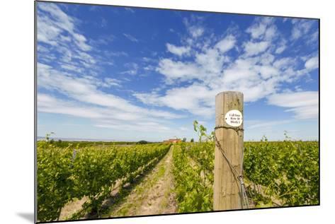 Cabernet Sauvignon Vineyards, Pepper Bridge Winery, Washington, USA-Richard Duval-Mounted Photographic Print