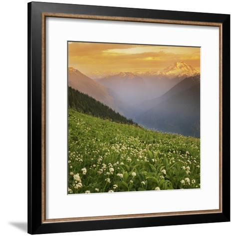 Hellebore and Sitka Valerian, Glacier Peak Wilderness, Washington, USA-Charles Gurche-Framed Art Print