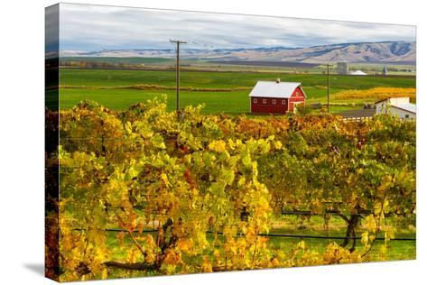 Autumn in Walla Walla Wine Country, Walla Walla, Washington, USA-Richard Duval-Stretched Canvas Print