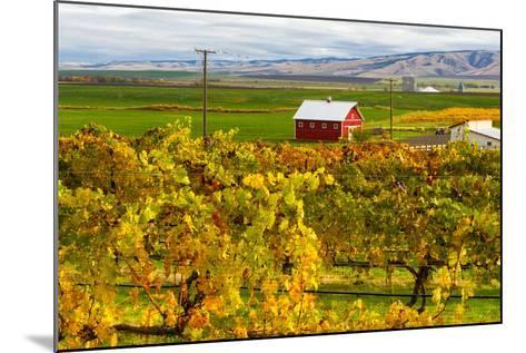 Autumn in Walla Walla Wine Country, Walla Walla, Washington, USA-Richard Duval-Mounted Photographic Print