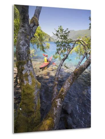 Sea Kayaker with Alder (Alnus Rubra), Crescent Lake, Washington, USA-Gary Luhm-Metal Print