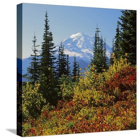 Mt Rainier Above Autumn Huckleberry, Chinook Pass, Washington, USA-Charles Gurche-Stretched Canvas Print