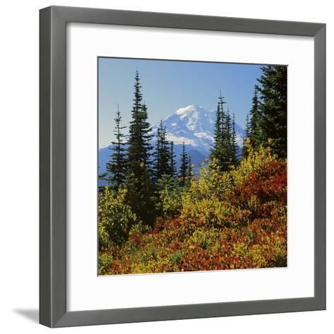 Mt Rainier Above Autumn Huckleberry, Chinook Pass, Washington, USA-Charles Gurche-Framed Art Print