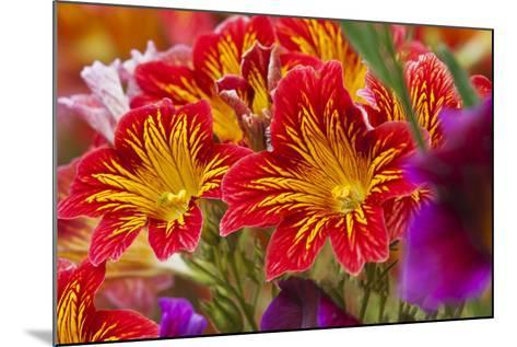 Summer Salpiglossis in Full Bloom, Washington, USA-Terry Eggers-Mounted Photographic Print