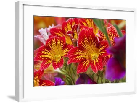 Summer Salpiglossis in Full Bloom, Washington, USA-Terry Eggers-Framed Art Print