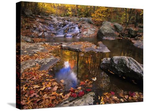Autumn Tranquility, Upper Whiteoak Falls, Shenandoah NP, Virginia, USA-Jerry Ginsberg-Stretched Canvas Print
