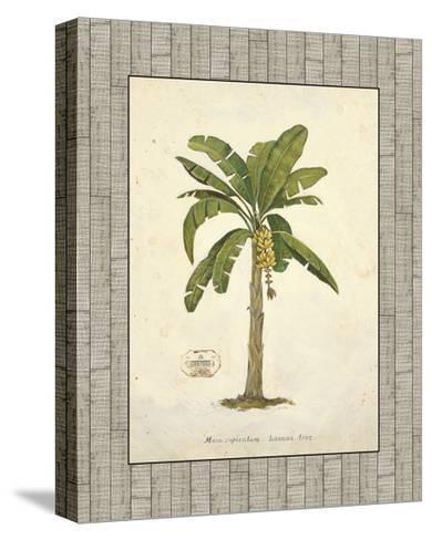 Banana Palm Illustration-Arnie Fisk-Stretched Canvas Print