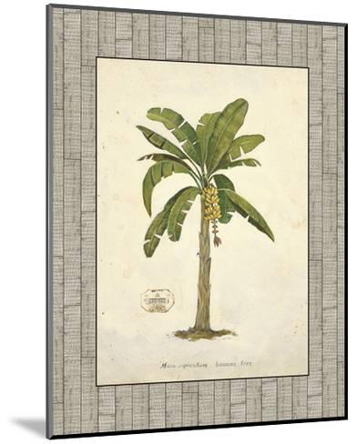 Banana Palm Illustration-Arnie Fisk-Mounted Art Print