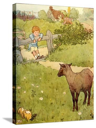 USA Baa Baa Black Sheep Book Plate--Stretched Canvas Print