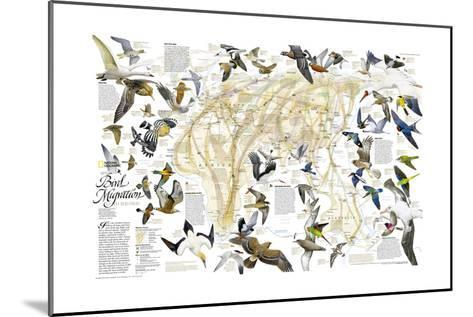 2004 Bird Migration Eastern Hemisphere Map-National Geographic Maps-Mounted Art Print