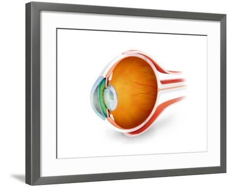 Anatomy of Human Eye, Perspective--Framed Art Print