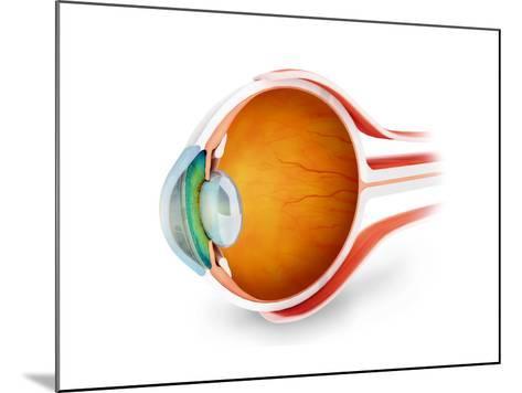 Anatomy of Human Eye, Perspective--Mounted Art Print