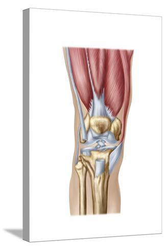 Anatomy of Human Knee Joint--Stretched Canvas Print