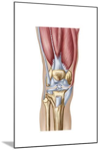 Anatomy of Human Knee Joint--Mounted Art Print
