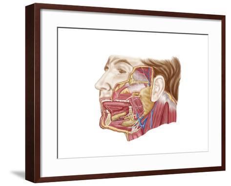 Anatomy of Human Salivary Glands--Framed Art Print