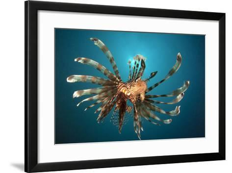 Close-Up View of a Lionfish. Gorontalo, Indonesia--Framed Art Print