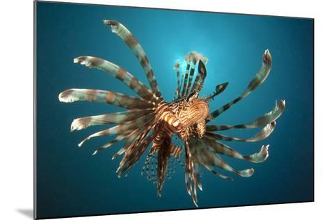 Close-Up View of a Lionfish. Gorontalo, Indonesia--Mounted Photographic Print