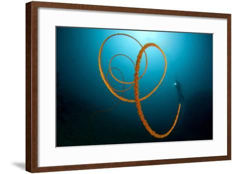 An Orange Wire Coral, Lembeh Strait, Indonesia--Framed Art Print