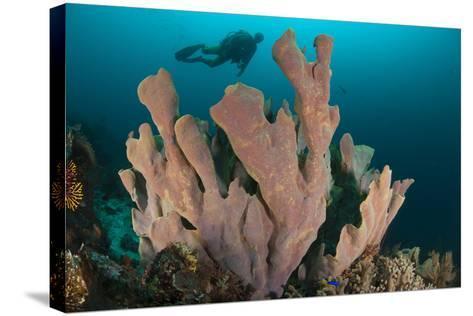 Diver and Elephant Ear Sponge, Raja Ampat, West Papua, Indonesia--Stretched Canvas Print
