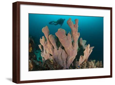 Diver and Elephant Ear Sponge, Raja Ampat, West Papua, Indonesia--Framed Art Print