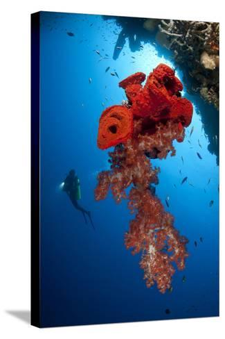Diver Looks on at a Bright Red Soft Coral and Sponge Hanging from a Cave--Stretched Canvas Print