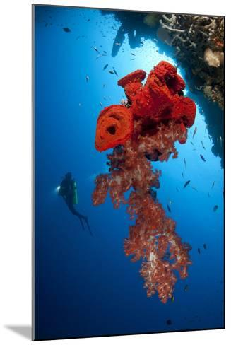 Diver Looks on at a Bright Red Soft Coral and Sponge Hanging from a Cave--Mounted Photographic Print