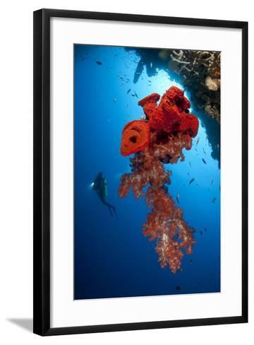 Diver Looks on at a Bright Red Soft Coral and Sponge Hanging from a Cave--Framed Art Print
