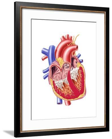 Anatomy of Human Heart, Cross Section--Framed Art Print