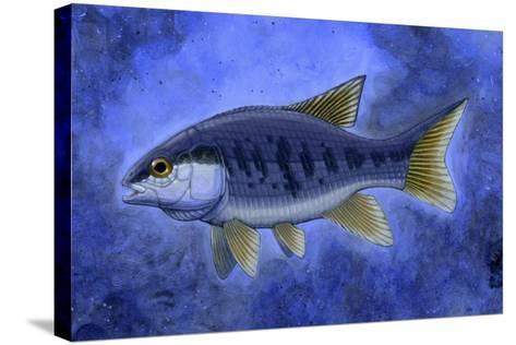 Semionotus (Flag-Back), an Extinct Genus of Ray-Finned Fish--Stretched Canvas Print