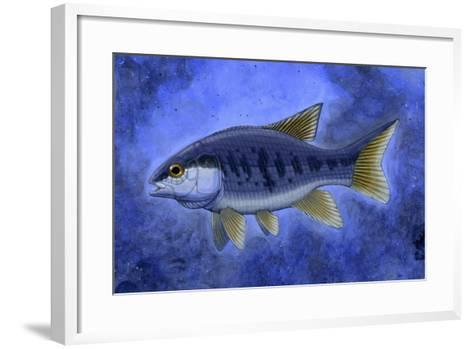 Semionotus (Flag-Back), an Extinct Genus of Ray-Finned Fish--Framed Art Print