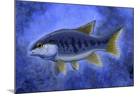Semionotus (Flag-Back), an Extinct Genus of Ray-Finned Fish--Mounted Art Print
