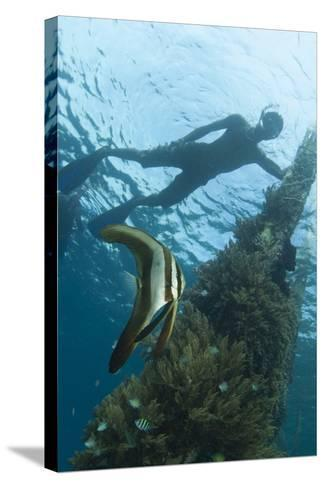 A Juvenile Golden Spadefish Whilst a Local Villager Watches from the Surface--Stretched Canvas Print