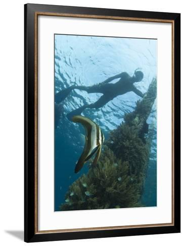 A Juvenile Golden Spadefish Whilst a Local Villager Watches from the Surface--Framed Art Print