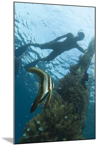 A Juvenile Golden Spadefish Whilst a Local Villager Watches from the Surface--Mounted Photographic Print