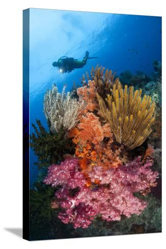 A Diver Approaches Colorful Soft Corals and Crinoids on the Reefs of Raja Ampat--Stretched Canvas Print