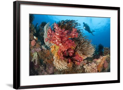 A Diver Approaches Colorful Soft Corals and Crinoids on the Reefs of Raja Ampat--Framed Art Print