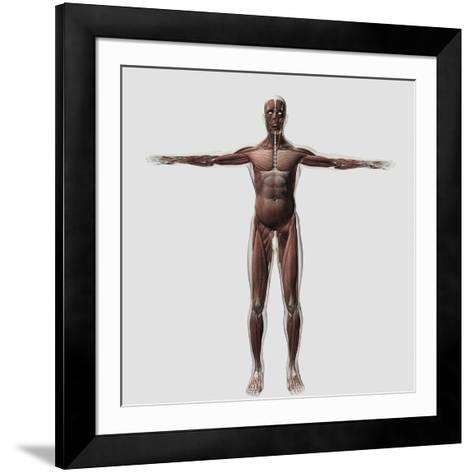 Anatomy of Male Muscular System, Front View--Framed Art Print